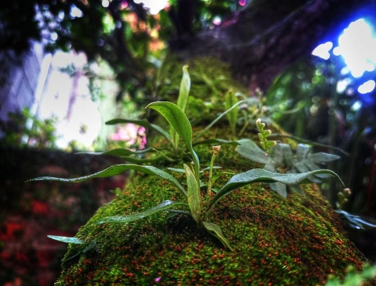 Baumstamm - Perspective Orchideen
