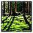 worldwide_growth_of_forest_logo_48x48