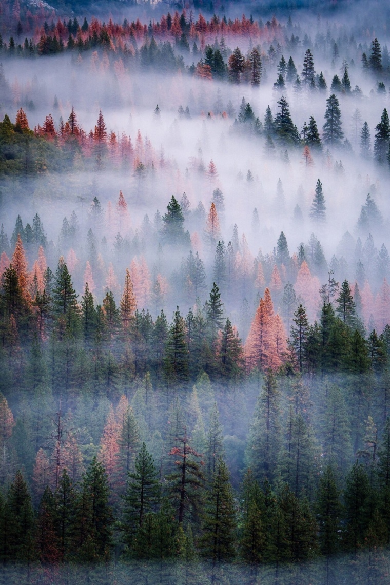 Forest in Siberia - Russia.