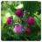 AppleTree_logo_48x48