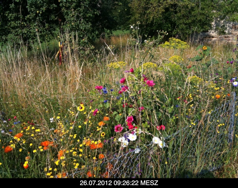 Martin Bernhardt's garden of nature. just nature, and flowers, to remain.