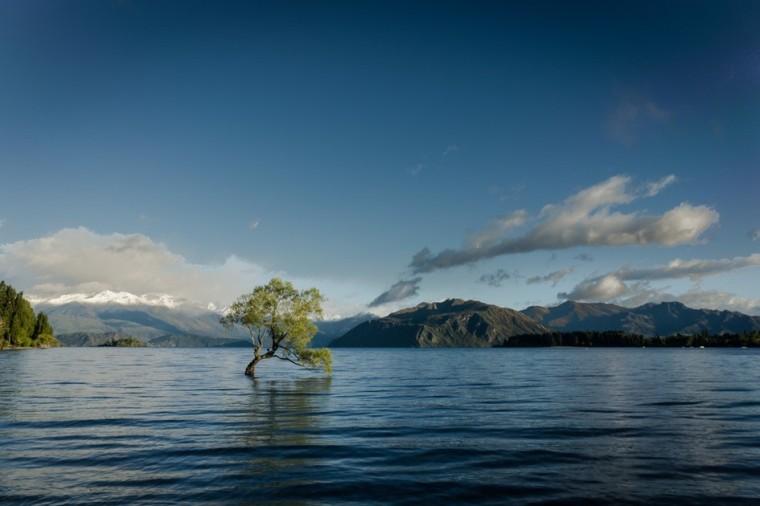 Baum im Bergsee-im-Wasser